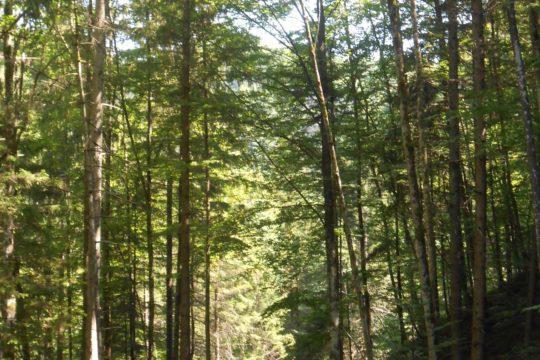 Descente en rappel picos – Camp du 80ème 2013